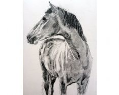 Horse Portrait Drawing Example